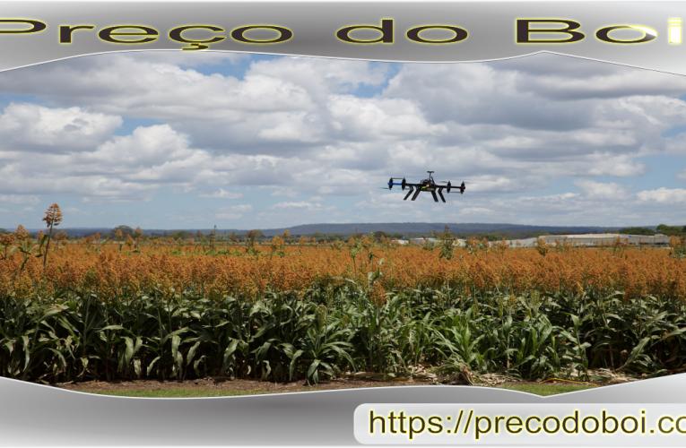 O que esperar da agricultura brasileira em 2019-2020